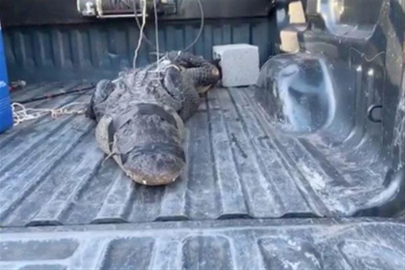 Пожилой мужчина вступил в схватку с двухметровым крокодилом