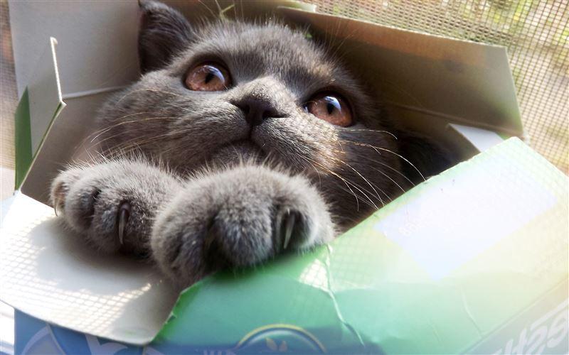 Ученые выяснили, почему коты любят коробки