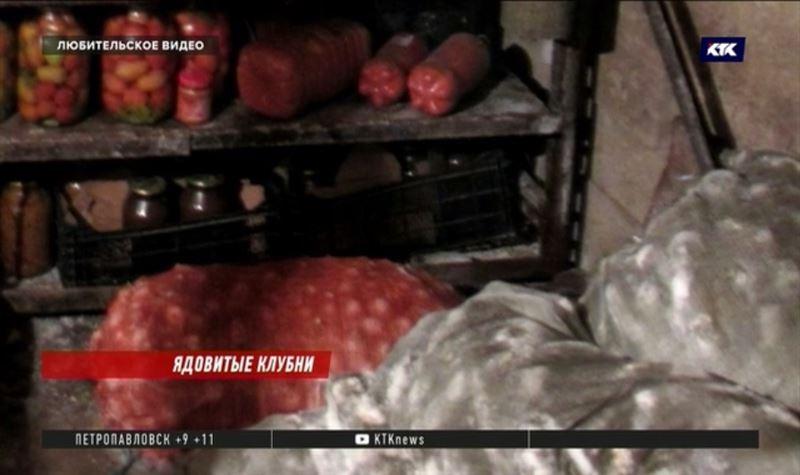 Ядовитый картофель убил четыре человека в Акмолинской области