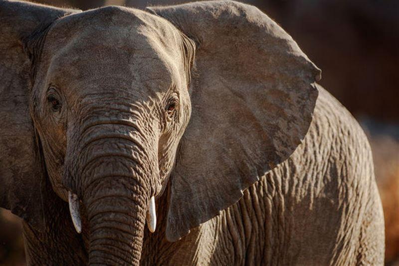 В Индии слон затоптал насмерть пятерых человек