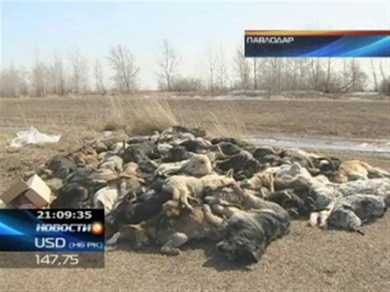 Шокирующая находка на окраине Павлодара