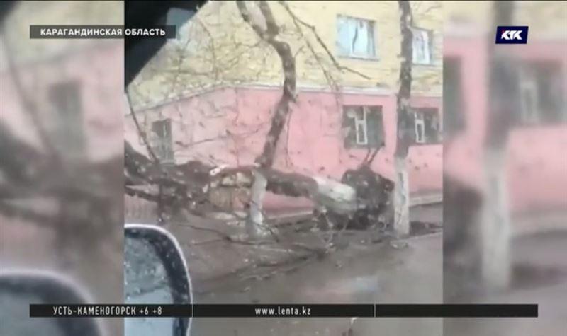 Штормовой ветер вырвал дерево с корнем в Караганде
