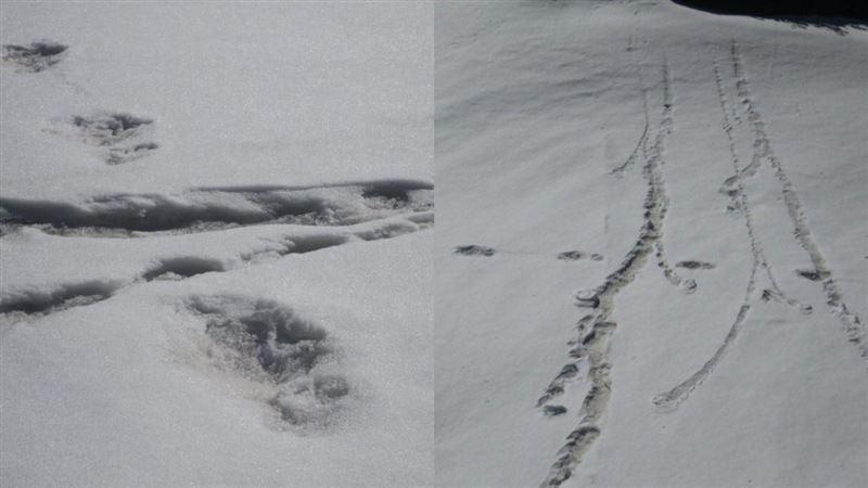 Армия Индии рассказала об обнаружении следов снежного человека