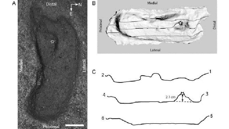 15,6 мың жыл бұрынғы адам ізі табылды
