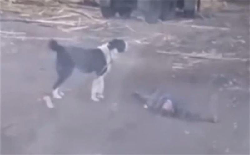 Алабай насмерть загрыз мужчину на Урале