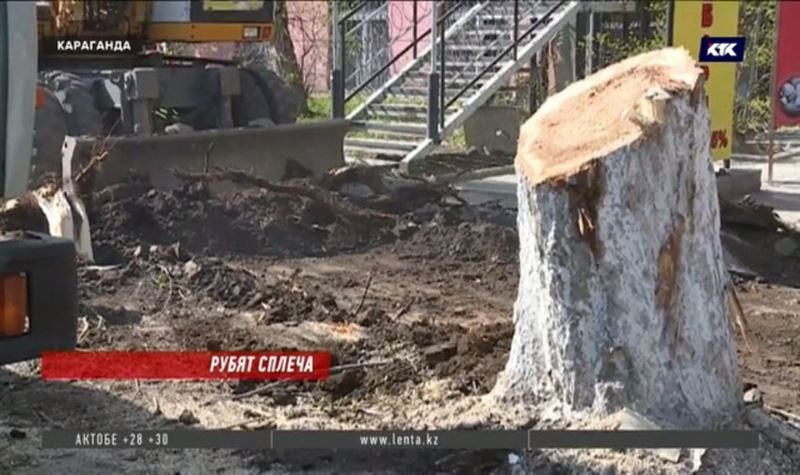 Акимат Караганды объяснил, зачем вырубает десятки деревьев