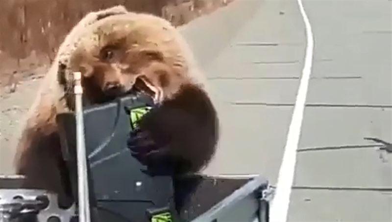 Медведь обокрал российских охотников