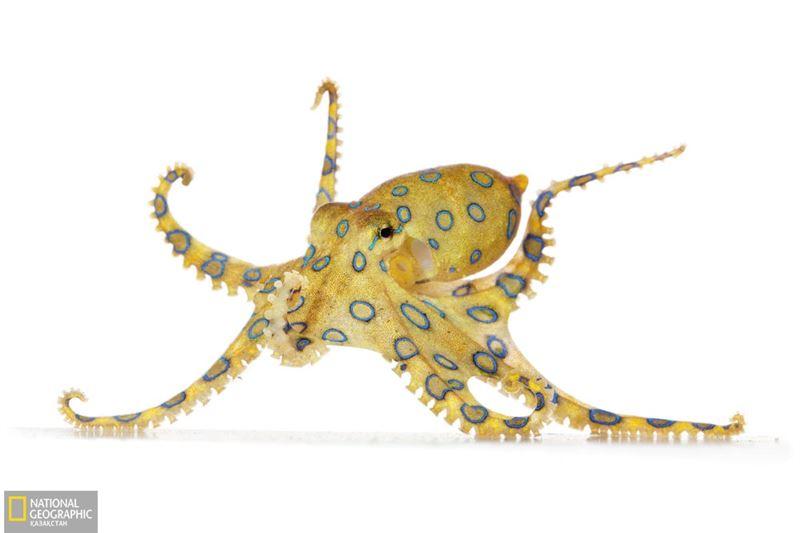 Тікелей эфирде тірі сегізаяқты жемек болған қытай қызының жан дауысы шықты