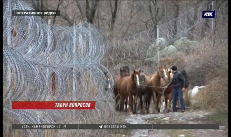 Отдавать контрабандных лошадей и коров в детдома предлагают пограничники