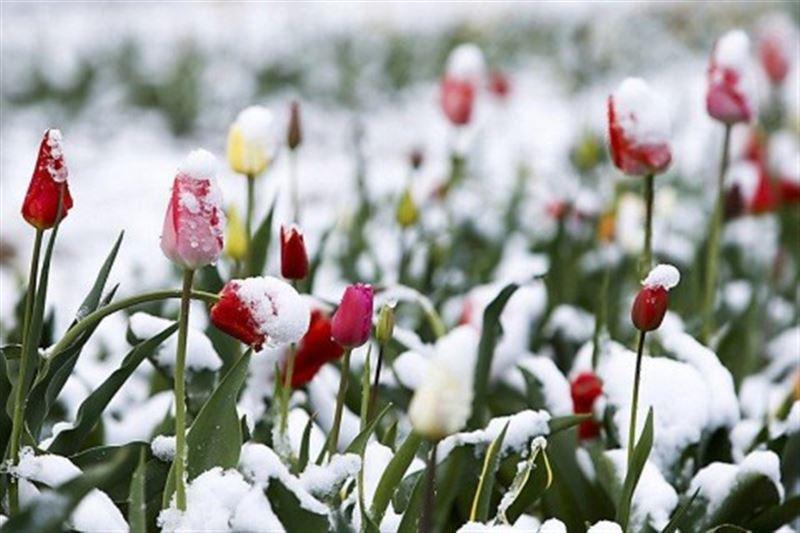 Неласковый май: в Усть-Каменогорске выпал снег