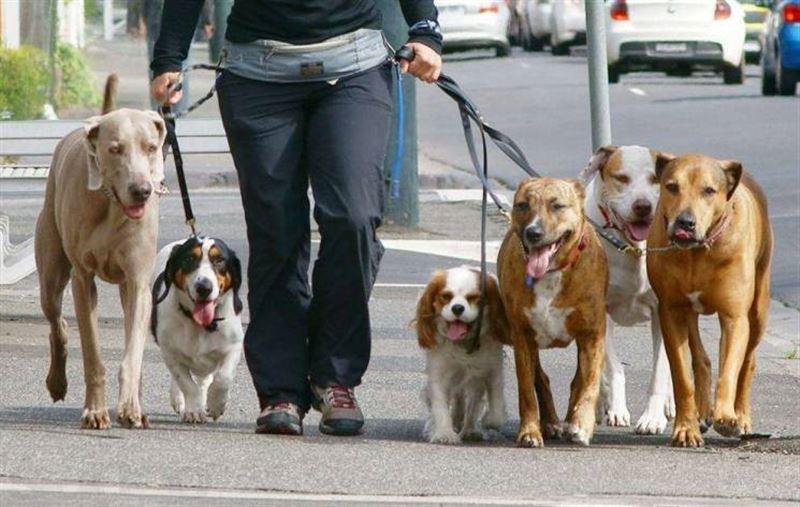 Ученые: Любовь к собакам заложена в генах человека