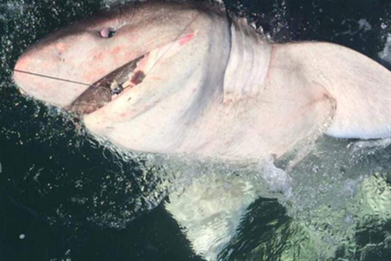 Женщина смогла поймать акулу весом в полтонны