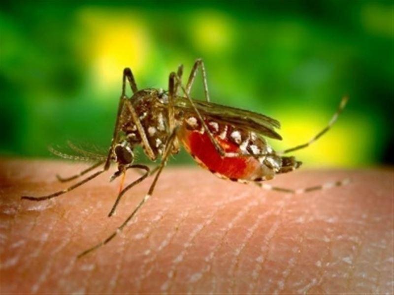 Эксперты выяснили, чью кровь предпочитают комары