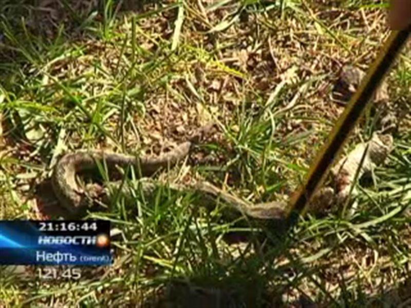 В Алматинской области во время прогулки в садике ребенка укусила змея