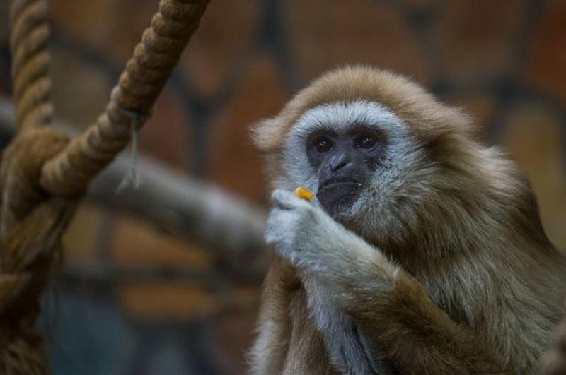 Обезьяна укусила 6-летнюю девочку в столичном контактном зоопарке