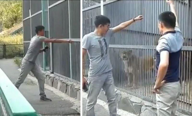 Қарағандыда зообақтағы арыстандарға тас лақтырған жігіттер жұртты ашуландырды