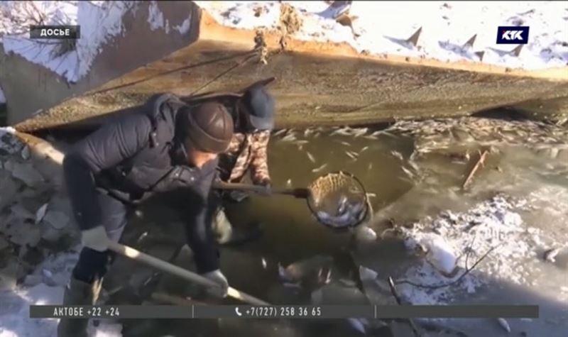Причиной массовой гибели рыбы в Урале стал хлор – выводы экологов