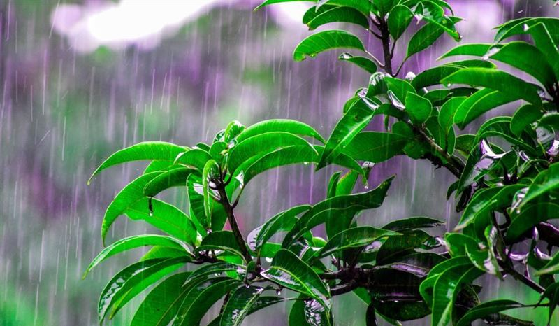 Какая погода будет в Казахстане в пятницу, 7 июня