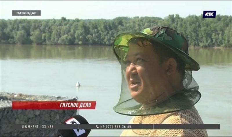 В Павлодаре свирепствует мошкара