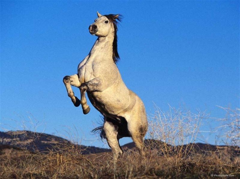 В Мангистау лошадь лягнула 5-летнего ребенка и проломила ему голову