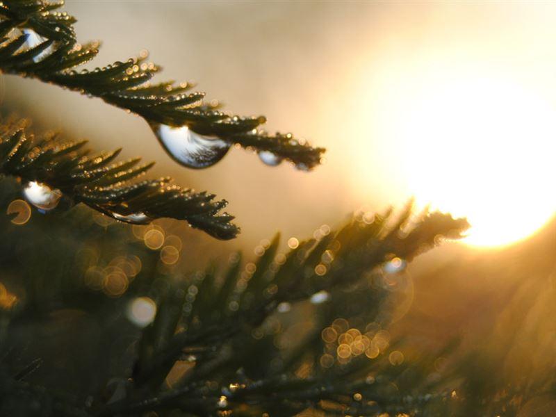 Прогноз погоды по Казахстану на понедельник, 17 июня