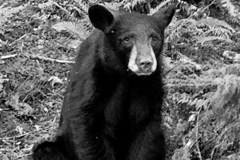 Биологи убили медвежонка из-за излишнего дружелюбия