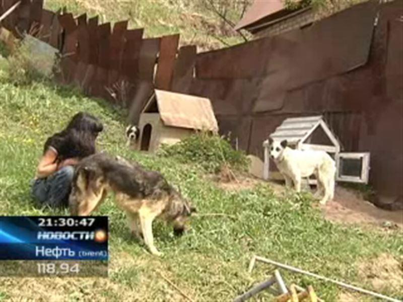 В Алматы на грани закрытия оказался приют для бездомных животных