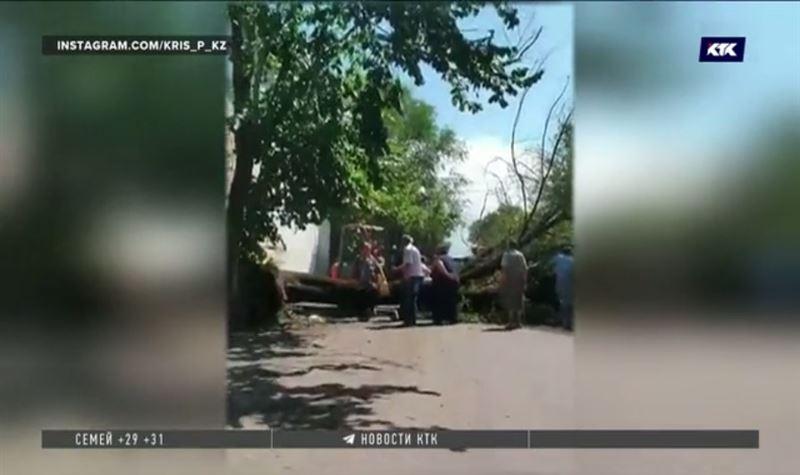 Упавшее дерево убило женщину в Алматы