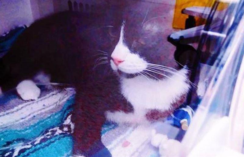 Кот пережил стирку в машинке и выжил