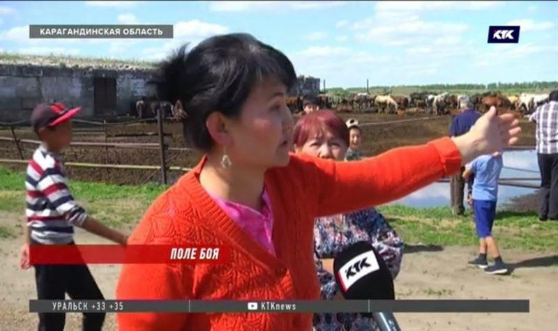 Из-за угрозы расстрела телята сидят на цепи, а коровы пасутся на мусорке