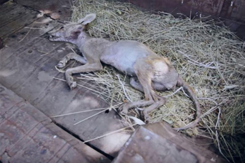 На Украине мужчина палкой убил загадочную «чупакабру»