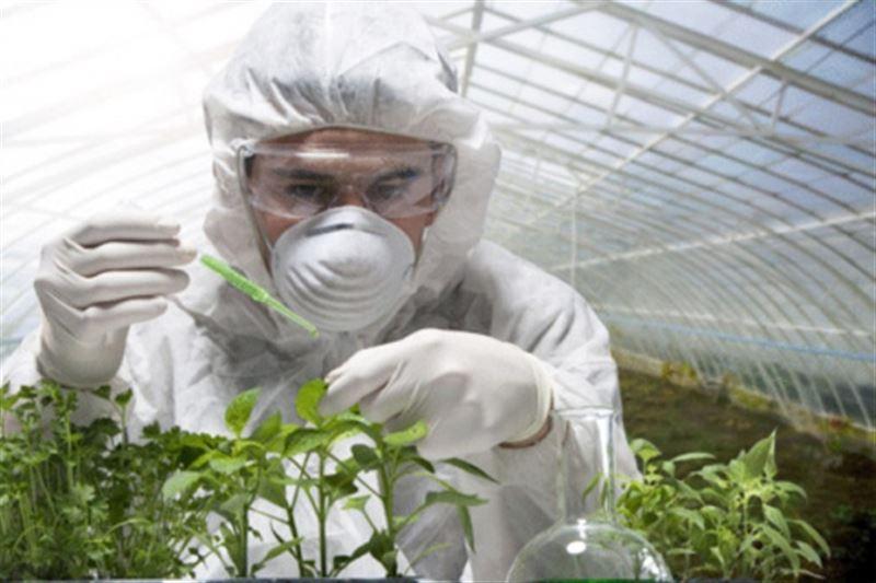 Учёные убедились в отсутствии сознания у растений