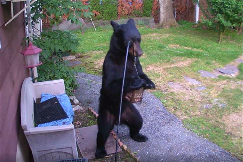 Пес, защищая детей, прогнал со двора медведя