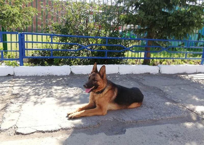 В Кокшетау благодаря псу удалось задержать наркодилера