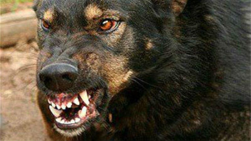 Собаки съели тело хозяина вместе с костями и одеждой