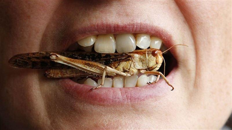 Диетологи рассказали, почему люди должны начать есть насекомых