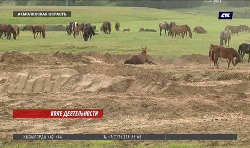 Сельчанам Акмолинской области выделили под пастбища каменистую землю