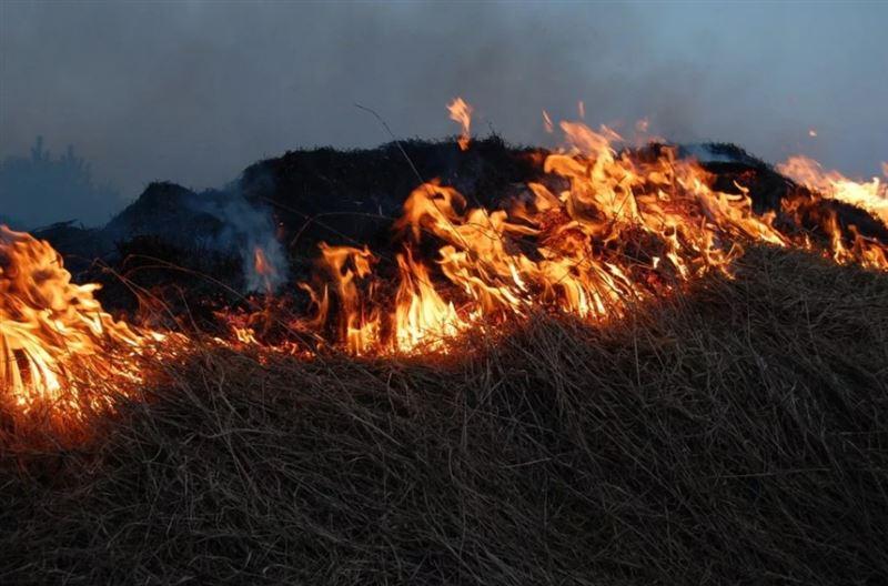 Пожар вспыхнул в Наурзумском заповеднике Костанайской области