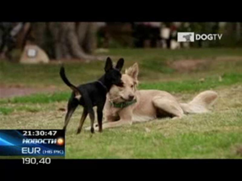 В США разработан первый в мире канал для собак