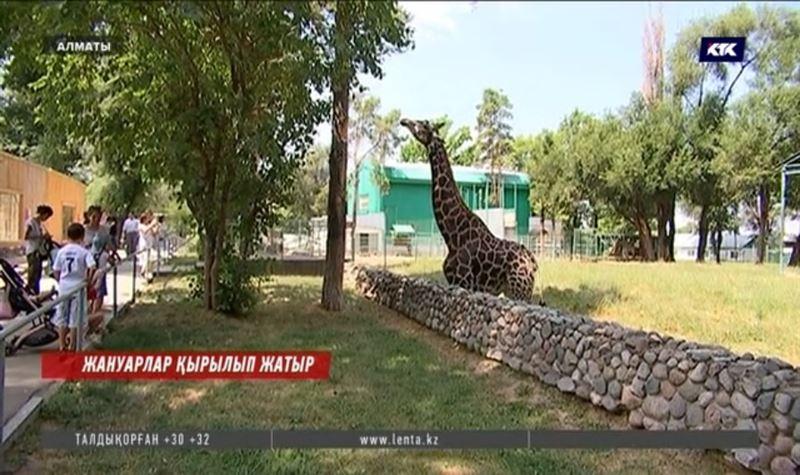 Алматы зообағында жан-жануарлар азайып барады