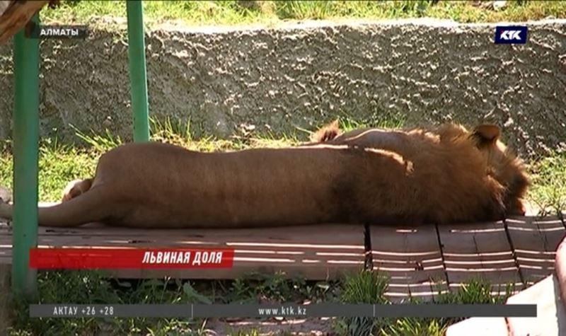 После массовой гибели животных уволили пять работников зоопарка