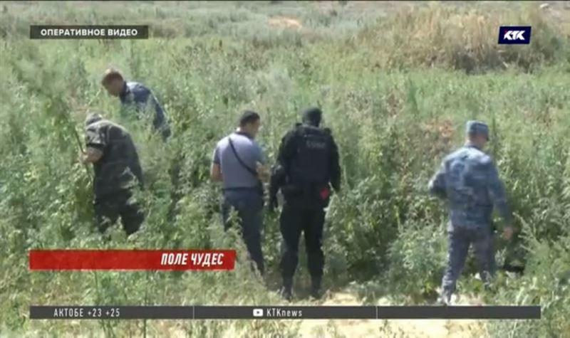 Прополов 1 гектар, полицейские собрали около 400 кг марихуаны