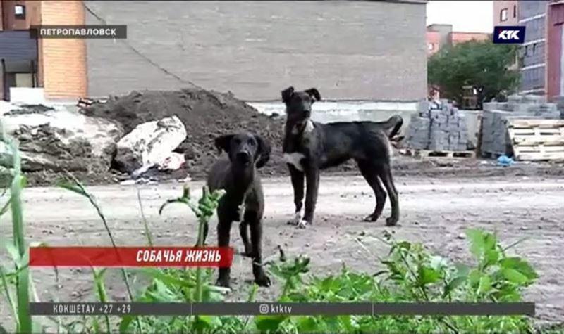 Петропавловцы переезжают в новые квартиры, бросив своих собак