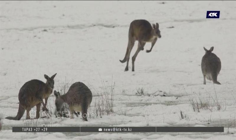 На юго-востоке Австралии впервые за последние 35 лет выпал снег
