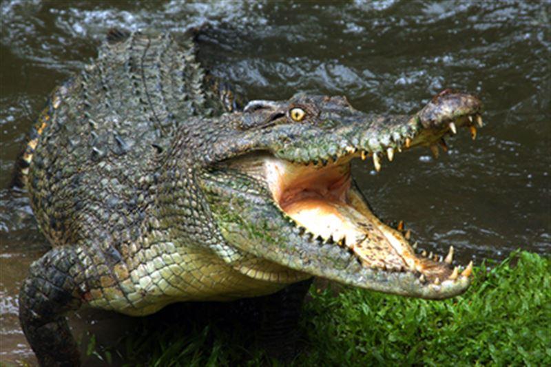 Крокодил стянул ребенка с лодки и проглотил его