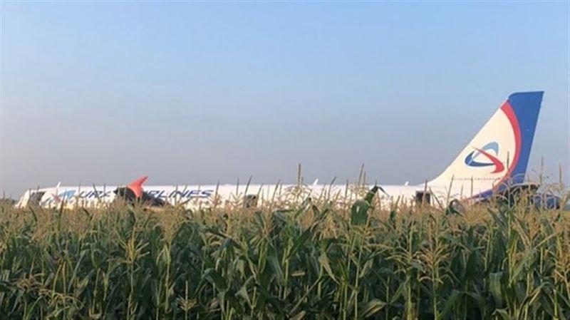 Пассажирский Airbus совершил посадку на кукурузное поле в Подмосковье