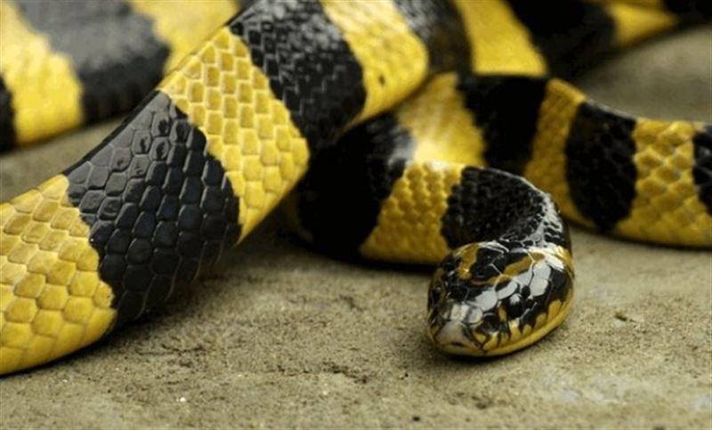 Охранник скончался из-за халатности после укуса змеи