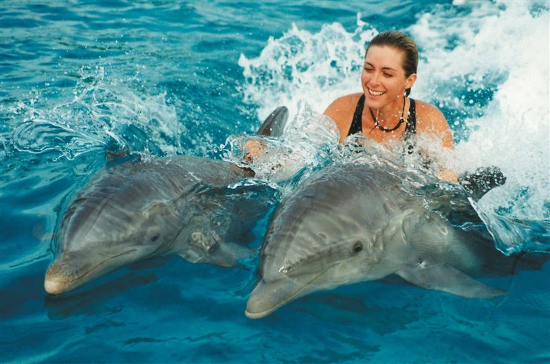 Власти Новой Зеландии запретили купаться с дельфинами