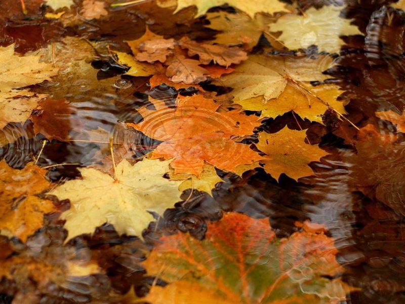 Дожди с грозами ожидаются в Казахстане в понедельник, 16 сентября