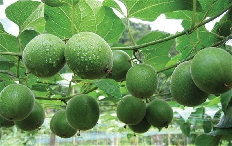 Китайские ученые рассказали о фрукте, который замедляет старение